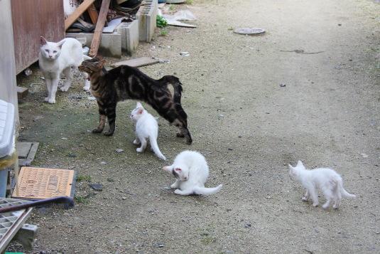大人ネコ、子ネコ