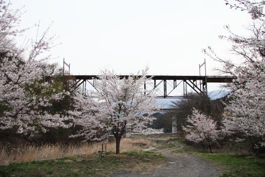 立場川橋梁と桜
