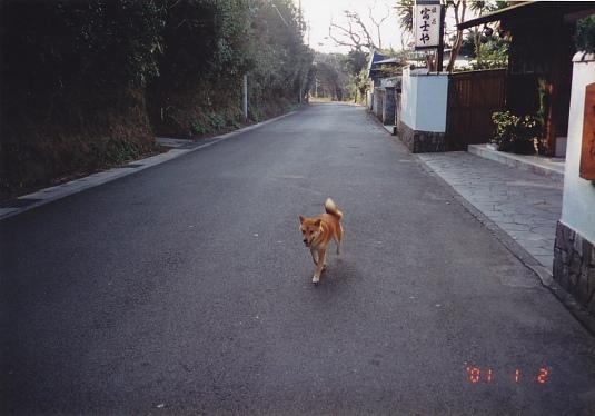突然やってきた犬
