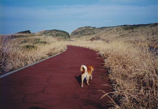 絶景の中、犬といっしょに歩いた