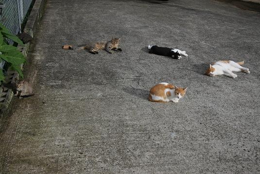 高千穂にて、ネコのたまり場
