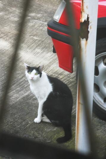 カーポートのネコ
