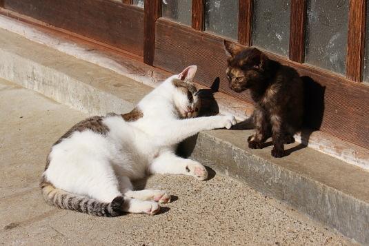 大人げなく、子ネコの尻尾で遊ぶ