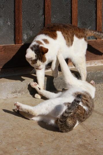 別のネコにも手を出す