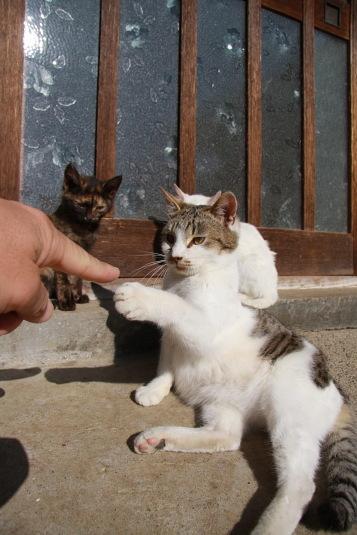 再び、指をだしてみると・・・