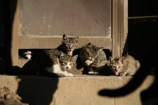 子ネコたちのたまり場