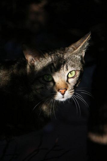 日陰に隠れていたネコ