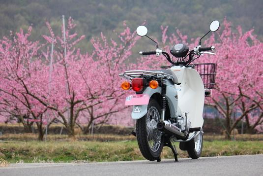 桃の花がピンク色のナンバープレートに似合う